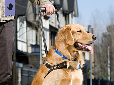 How to Interact with Assistance Animals course image